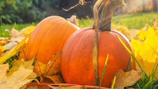 Pumpkin & Gourd Sale